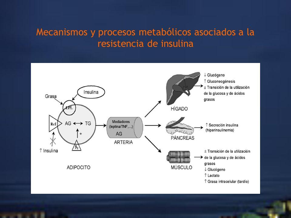 Mecanismos y procesos metabólicos asociados a la resistencia de insulina