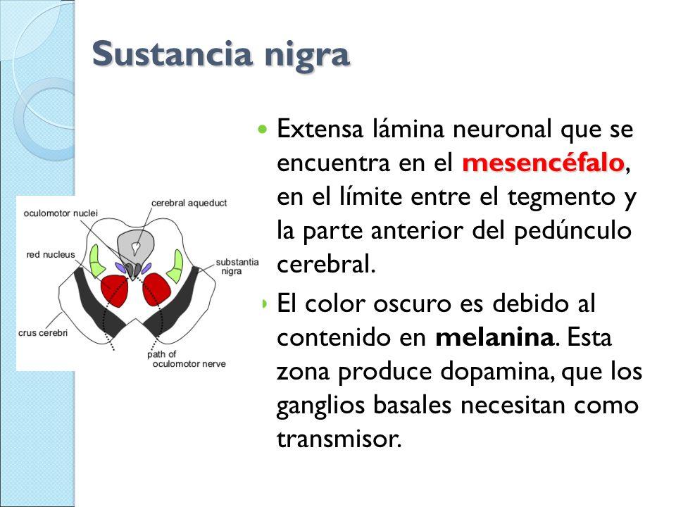 Sustancia nigra