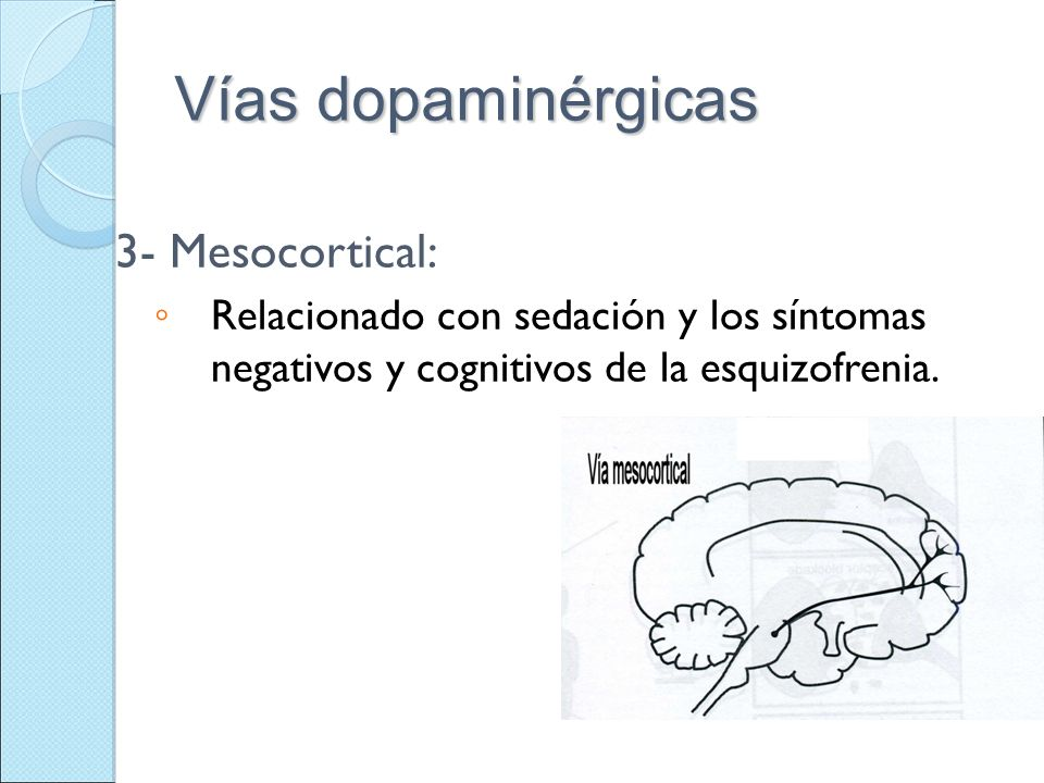 Vías dopaminérgicas 3- Mesocortical: