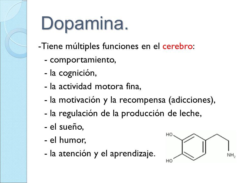 Dopamina. -Tiene múltiples funciones en el cerebro: - comportamiento,