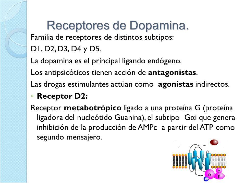 Receptores de Dopamina.