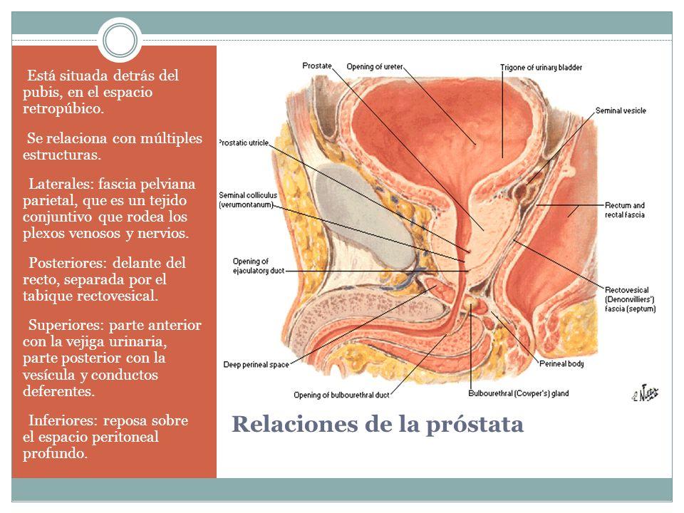 Relaciones de la próstata