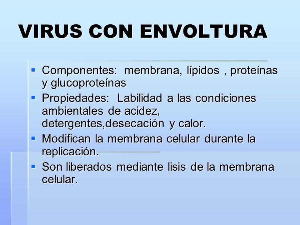 VIRUS CON ENVOLTURA Componentes: membrana, lípidos , proteínas y glucoproteínas.