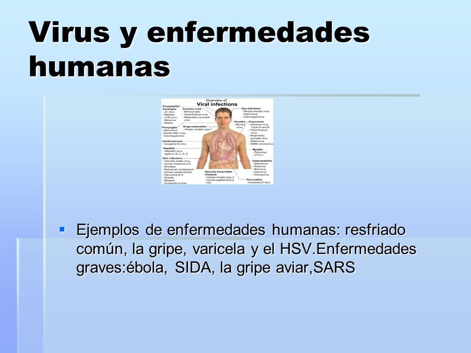 Virus y enfermedades humanas