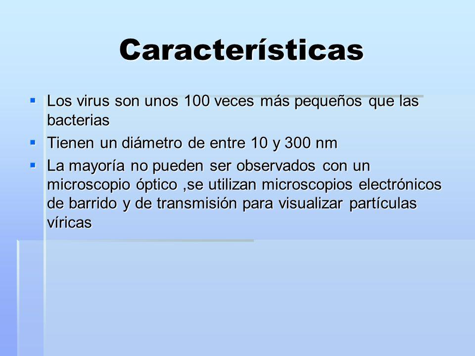 Características Los virus son unos 100 veces más pequeños que las bacterias. Tienen un diámetro de entre 10 y 300 nm.