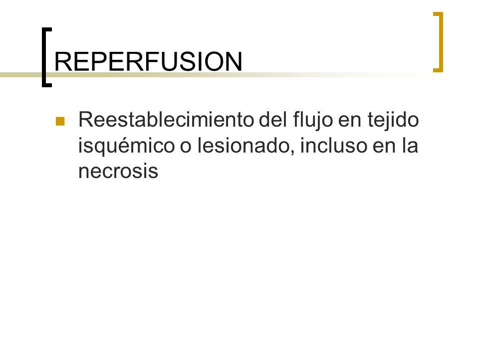 REPERFUSION Reestablecimiento del flujo en tejido isquémico o lesionado, incluso en la necrosis