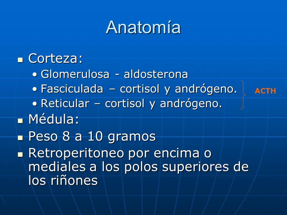 Anatomía Corteza: Médula: Peso 8 a 10 gramos