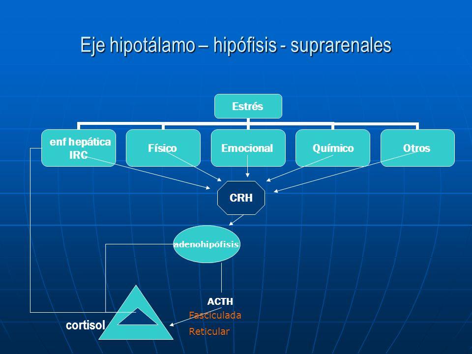 Eje hipotálamo – hipófisis - suprarenales
