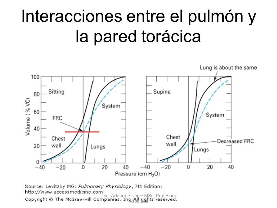 Interacciones entre el pulmón y la pared torácica