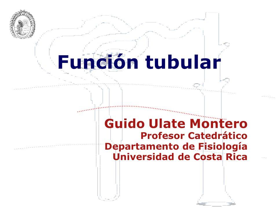 Función tubular Guido Ulate Montero Profesor Catedrático