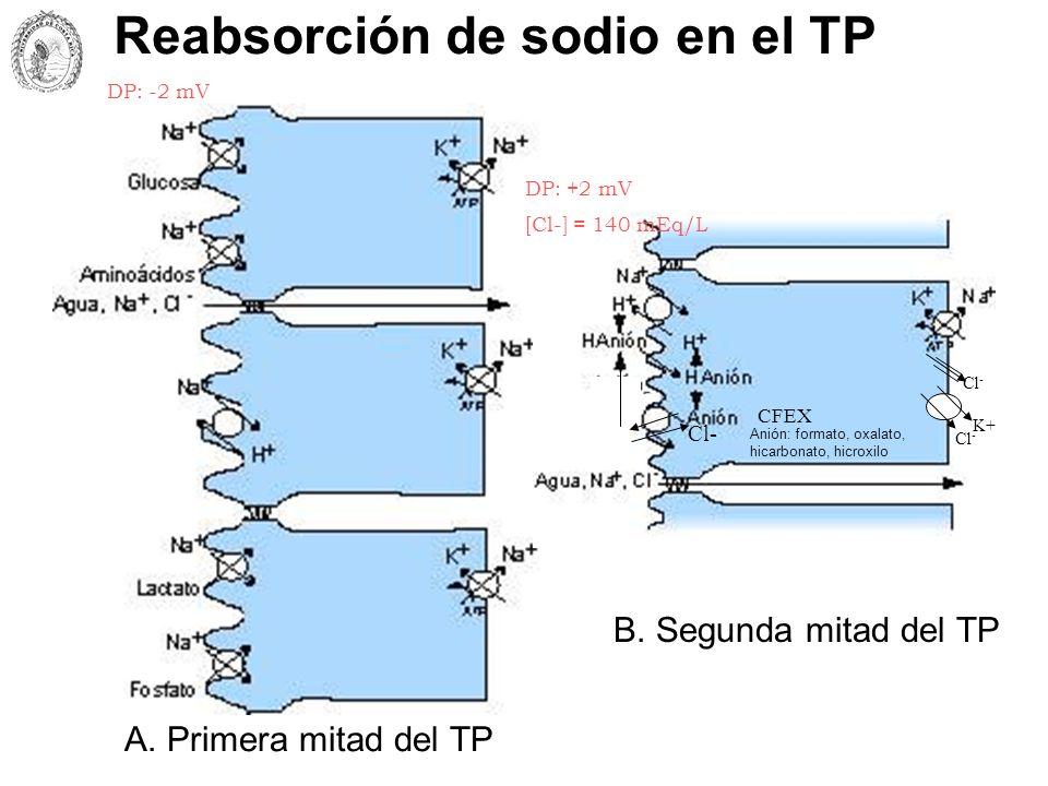 Reabsorción de sodio en el TP