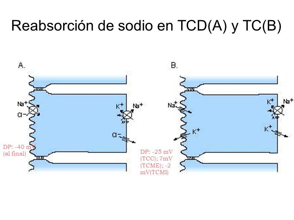 Reabsorción de sodio en TCD(A) y TC(B)