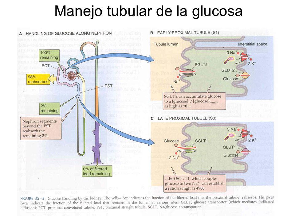 Manejo tubular de la glucosa