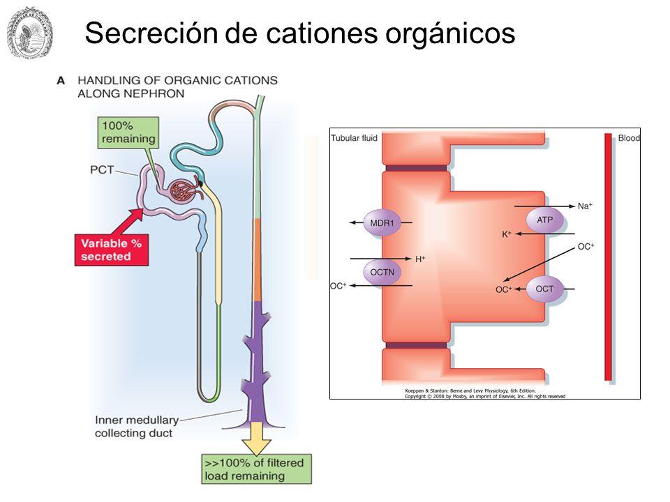 Secreción de cationes orgánicos