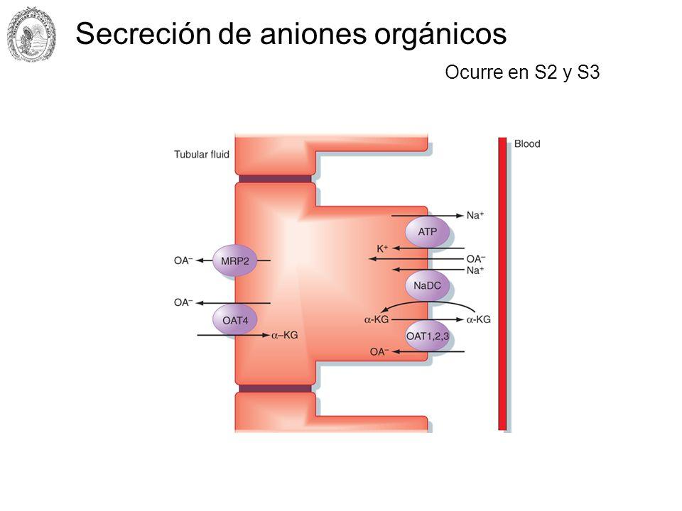 Secreción de aniones orgánicos
