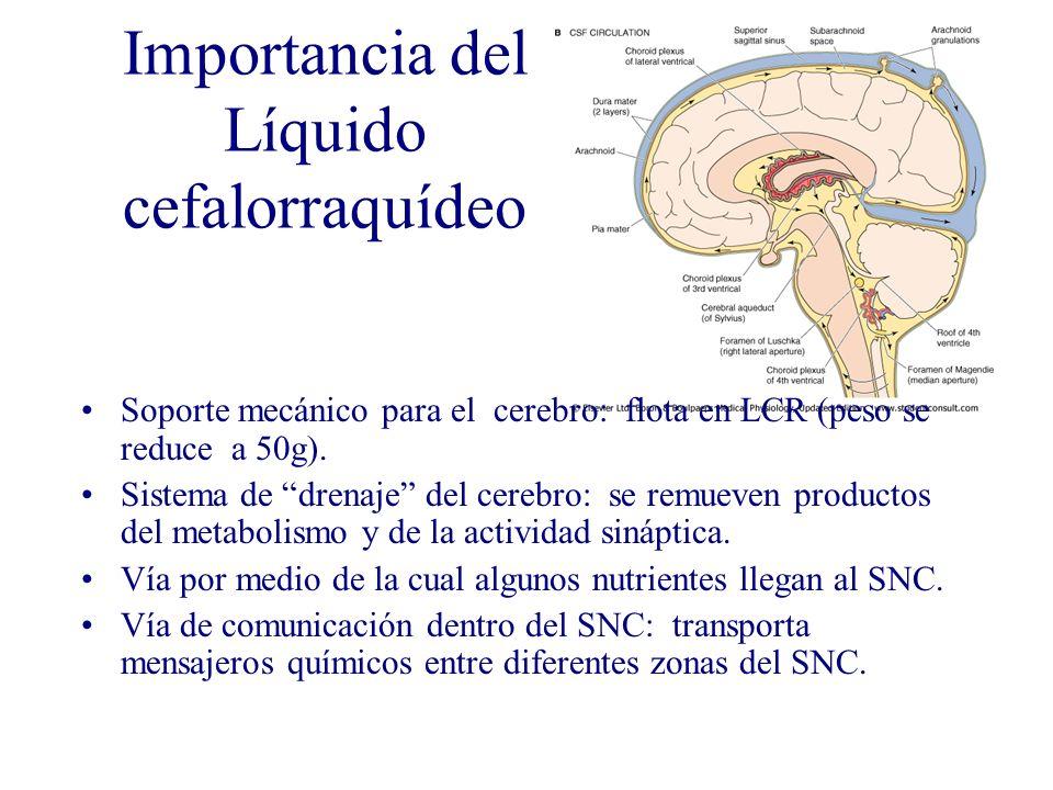 Importancia del Líquido cefalorraquídeo