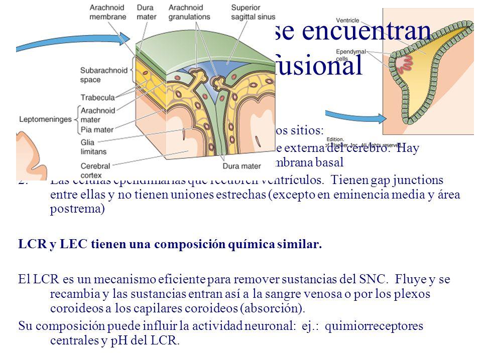 LCR y LEC cerebral se encuentran en equilibrio difusional