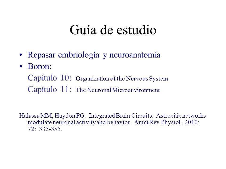 Guía de estudio Repasar embriología y neuroanatomía Boron: