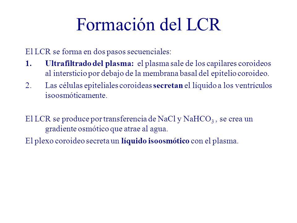 Formación del LCR El LCR se forma en dos pasos secuenciales: