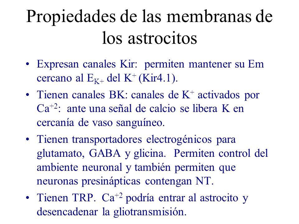 Propiedades de las membranas de los astrocitos