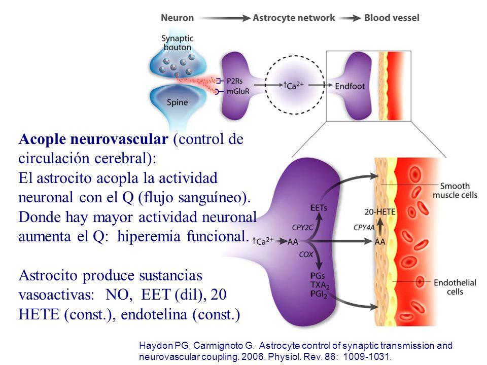 Acople neurovascular (control de circulación cerebral):