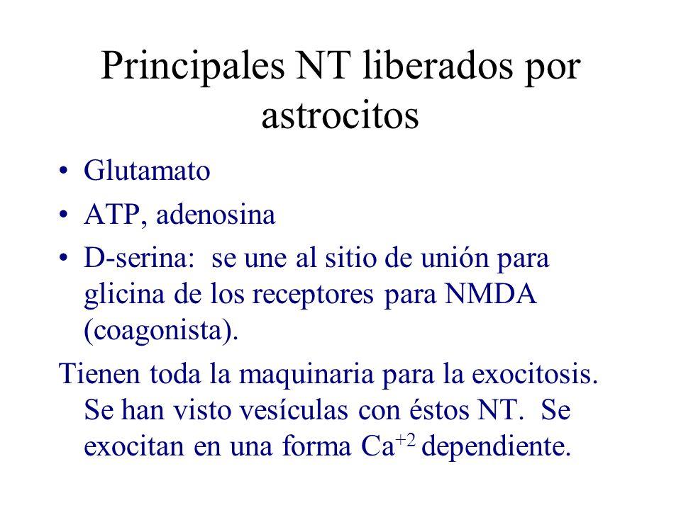 Principales NT liberados por astrocitos