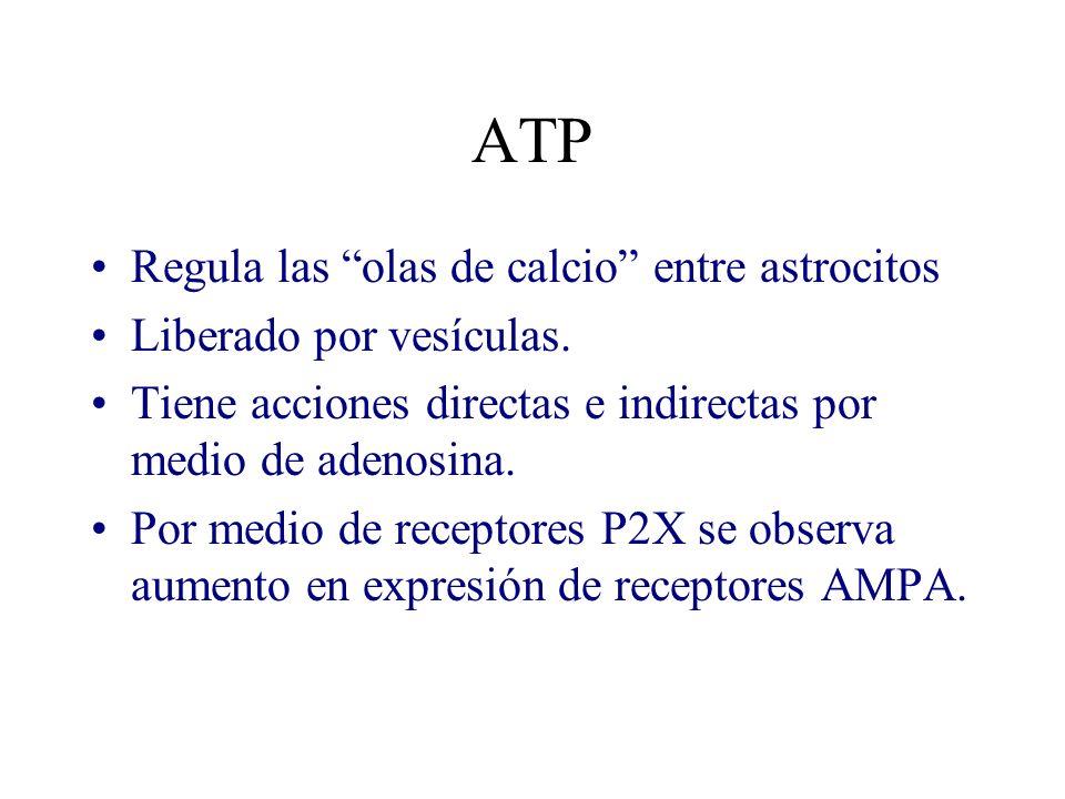 ATP Regula las olas de calcio entre astrocitos