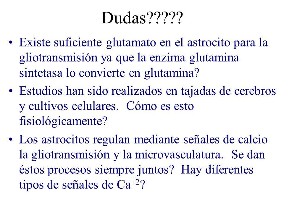 Dudas Existe suficiente glutamato en el astrocito para la gliotransmisión ya que la enzima glutamina sintetasa lo convierte en glutamina