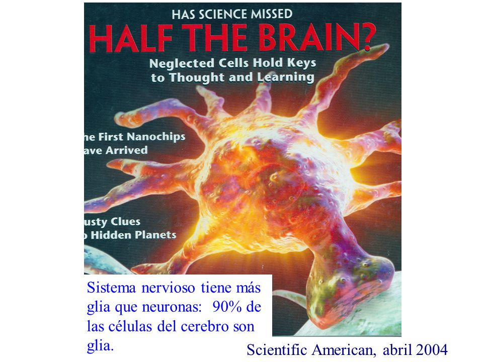 Scientific American, abril 2004