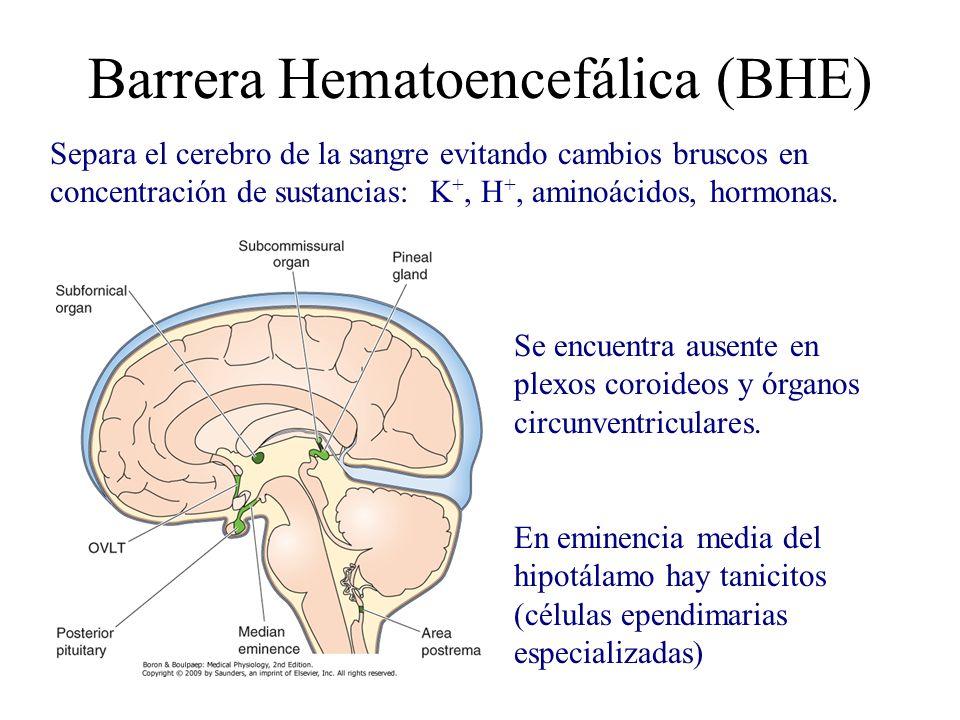 Barrera Hematoencefálica (BHE)