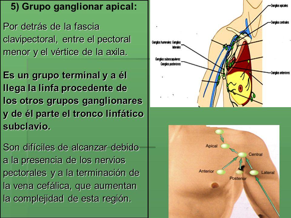 5) Grupo ganglionar apical: