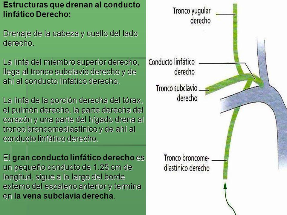 Estructuras que drenan al conducto