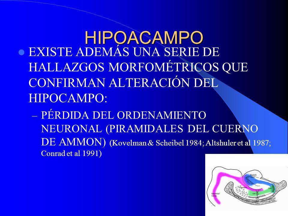 HIPOACAMPO EXISTE ADEMÁS UNA SERIE DE HALLAZGOS MORFOMÉTRICOS QUE CONFIRMAN ALTERACIÓN DEL HIPOCAMPO: