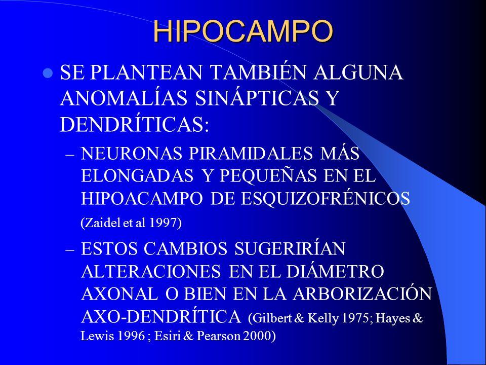 HIPOCAMPO SE PLANTEAN TAMBIÉN ALGUNA ANOMALÍAS SINÁPTICAS Y DENDRÍTICAS: