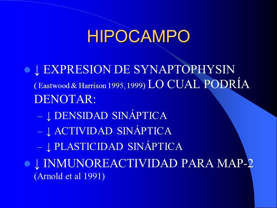HIPOCAMPO ↓ EXPRESION DE SYNAPTOPHYSIN ( Eastwood & Harrison 1995, 1999) LO CUAL PODRÍA DENOTAR: