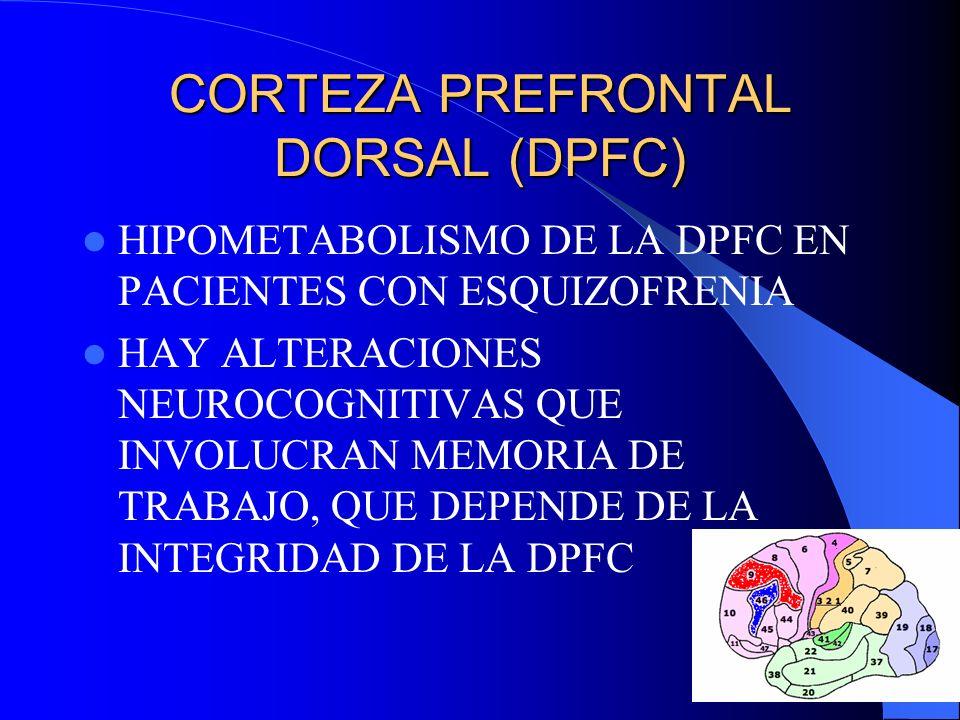 CORTEZA PREFRONTAL DORSAL (DPFC)