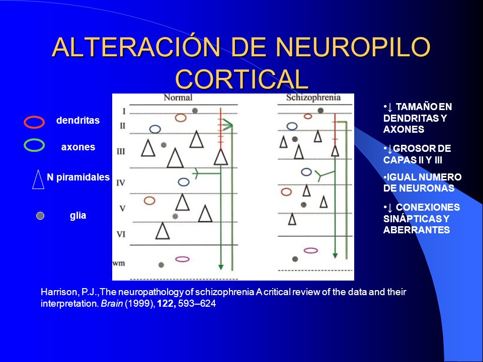 ALTERACIÓN DE NEUROPILO CORTICAL