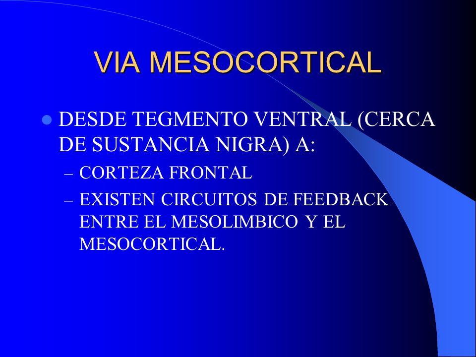 VIA MESOCORTICAL DESDE TEGMENTO VENTRAL (CERCA DE SUSTANCIA NIGRA) A: