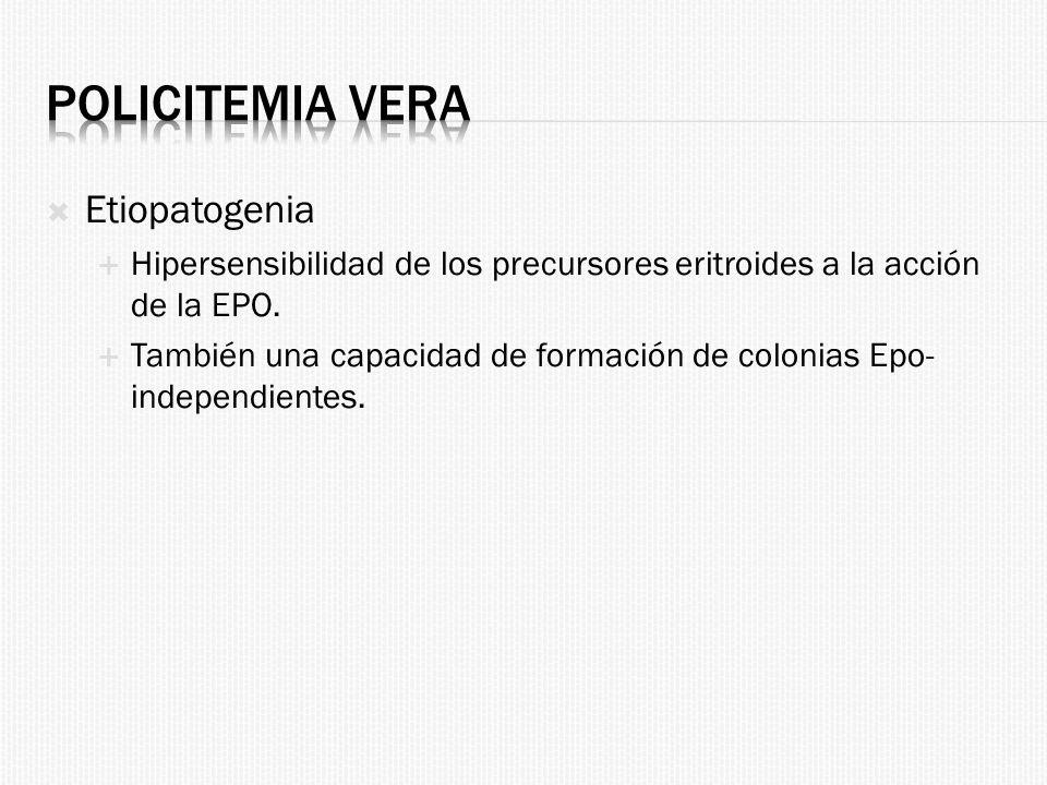 Policitemia Vera Etiopatogenia
