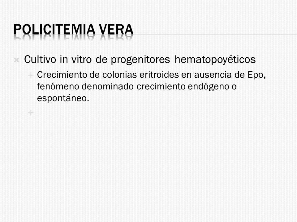 Policitemia Vera Cultivo in vitro de progenitores hematopoyéticos