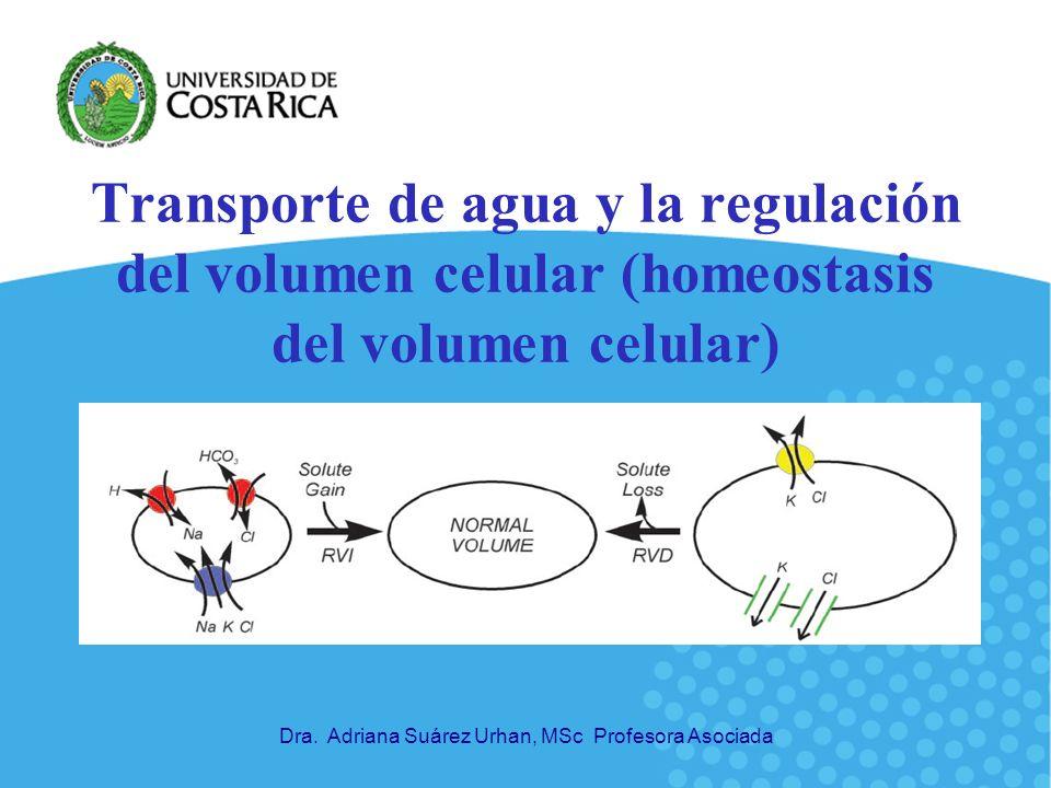 Transporte de agua y la regulación del volumen celular (homeostasis del volumen celular)