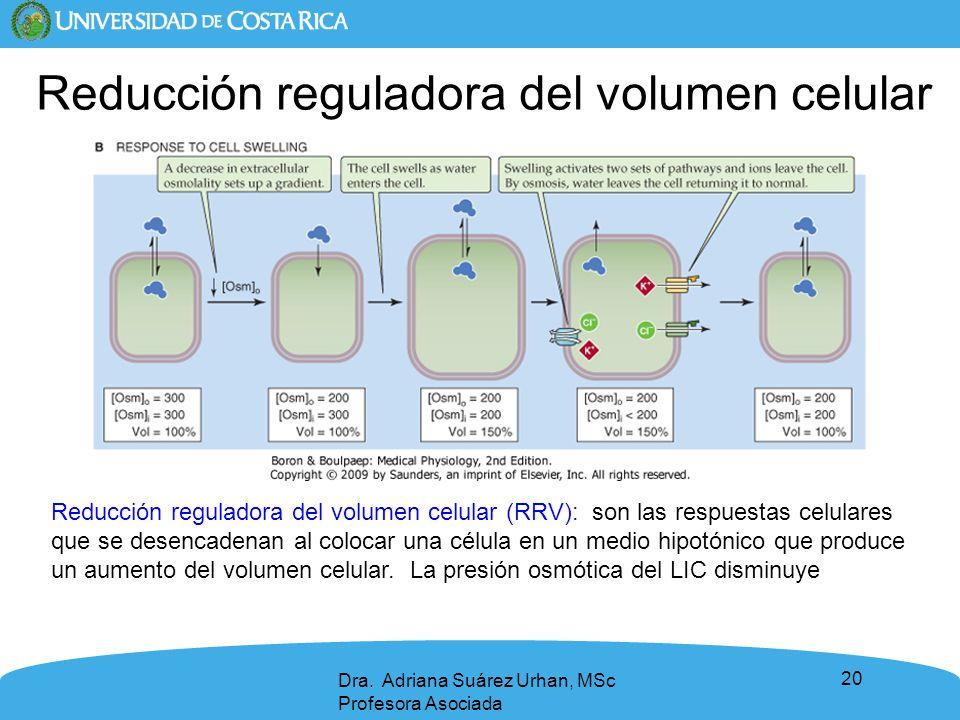 Reducción reguladora del volumen celular