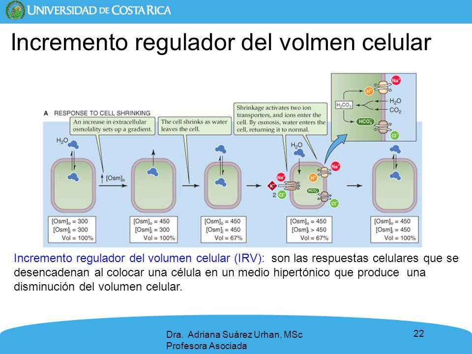 Incremento regulador del volmen celular