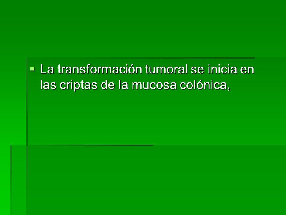 La transformación tumoral se inicia en las criptas de la mucosa colónica,