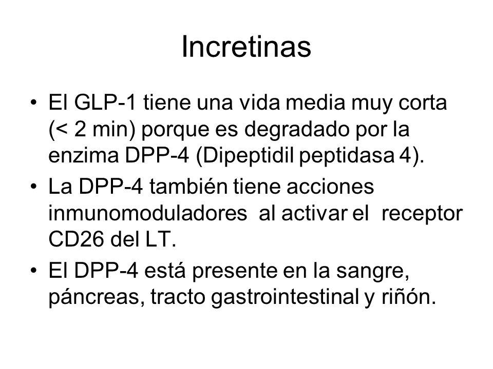 Incretinas El GLP-1 tiene una vida media muy corta (< 2 min) porque es degradado por la enzima DPP-4 (Dipeptidil peptidasa 4).