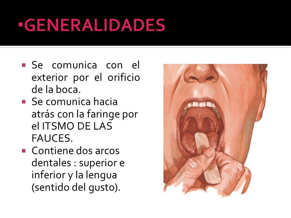 GENERALIDADES Se comunica con el exterior por el orificio de la boca.