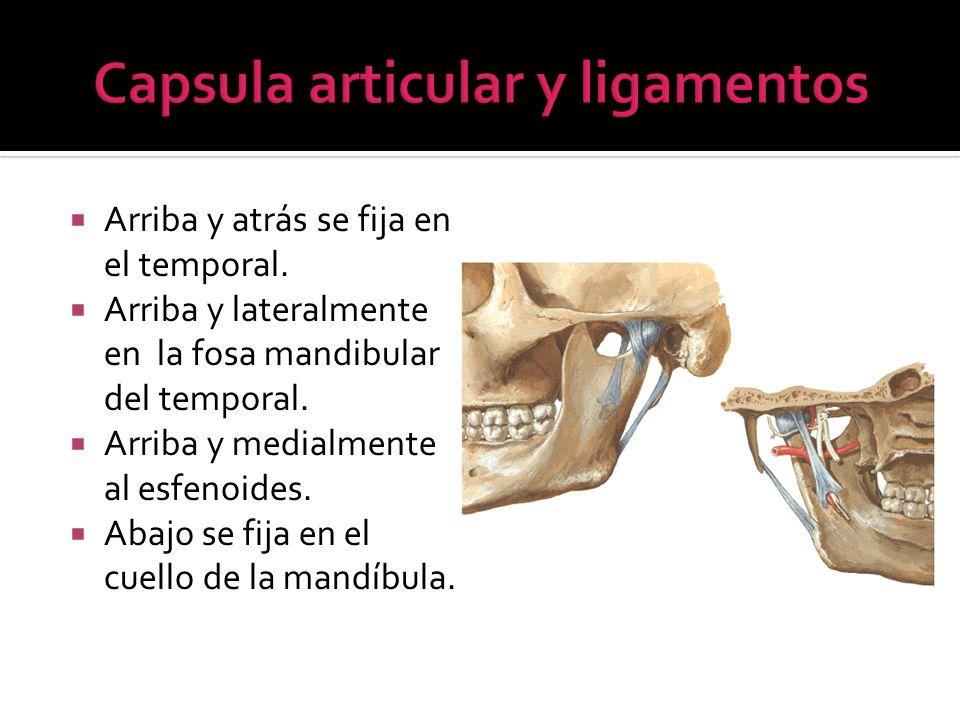 Capsula articular y ligamentos