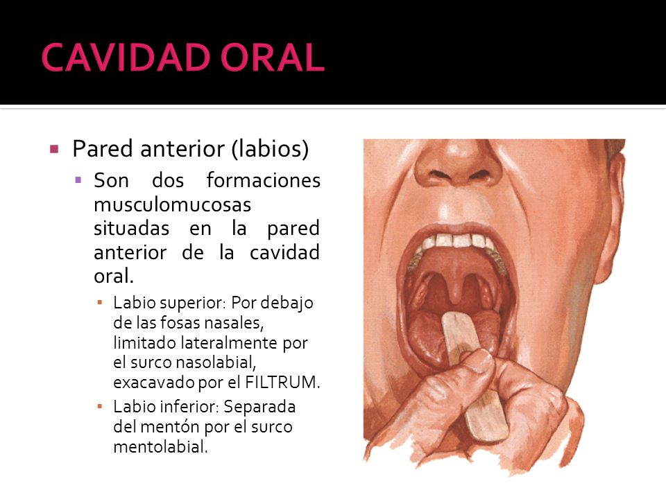 CAVIDAD ORAL Pared anterior (labios)