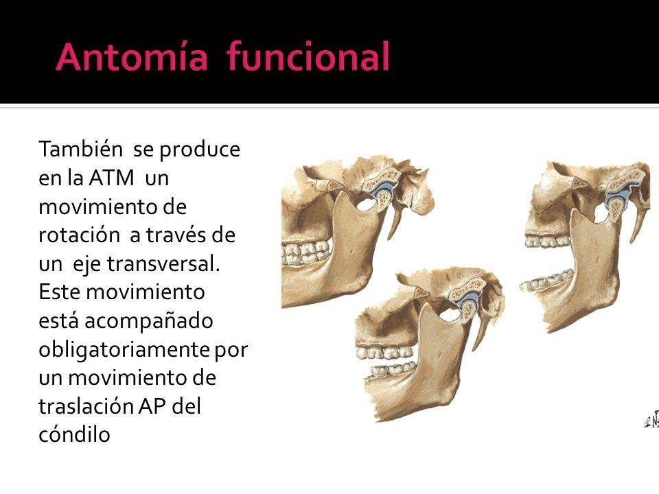 Antomía funcional