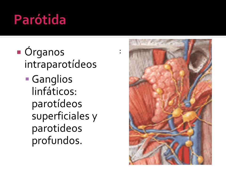 Parótida Órganos intraparotídeos